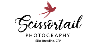Scissortail Photo